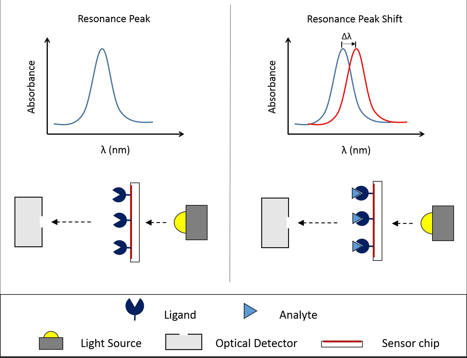"development of surface plasmon resonance spr sensor Discover reichert's surface plasmon resonance systems (spr)  2014 blog "" choosing the right sensor chip"" and the sensor chips section of our website."
