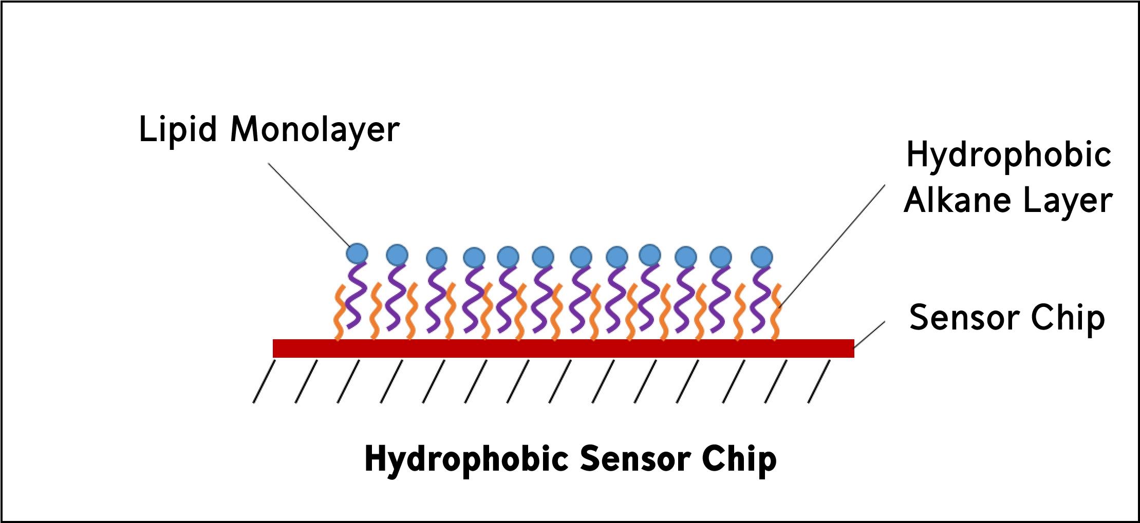 Binding Kinetics Of Protein Lipid Interactions Using Surface Plasmon
